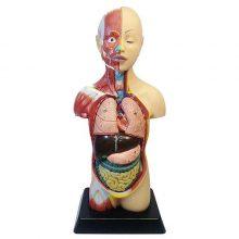 بازی آموزشی طرح مولاژ آناتومی بدن انسان مدل 6060