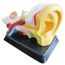 بازی آموزشی طرح مولاژ گوش انسان مدل ASM17