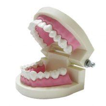 بازی آموزشی طرح مولاژ دندان مدل ASM40