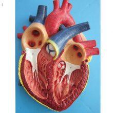 بازی آموزشی طرح مولاژ قلب مدل ASM31